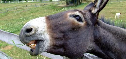 donkey-105719_640